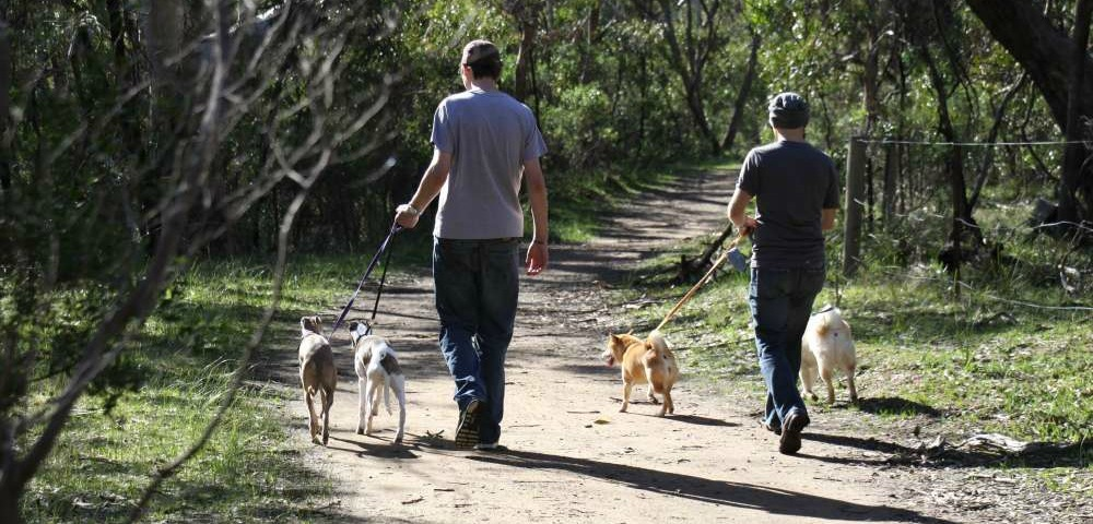 12 dog-friendly walks in Adelaide parks