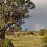 Natural History Society of South Australia / Wombats SA