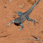 South Australian Herpetology Group