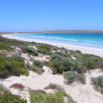 Sceale Bay Conservation Park