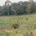 Friends of Woorabinda Bushland Reserves