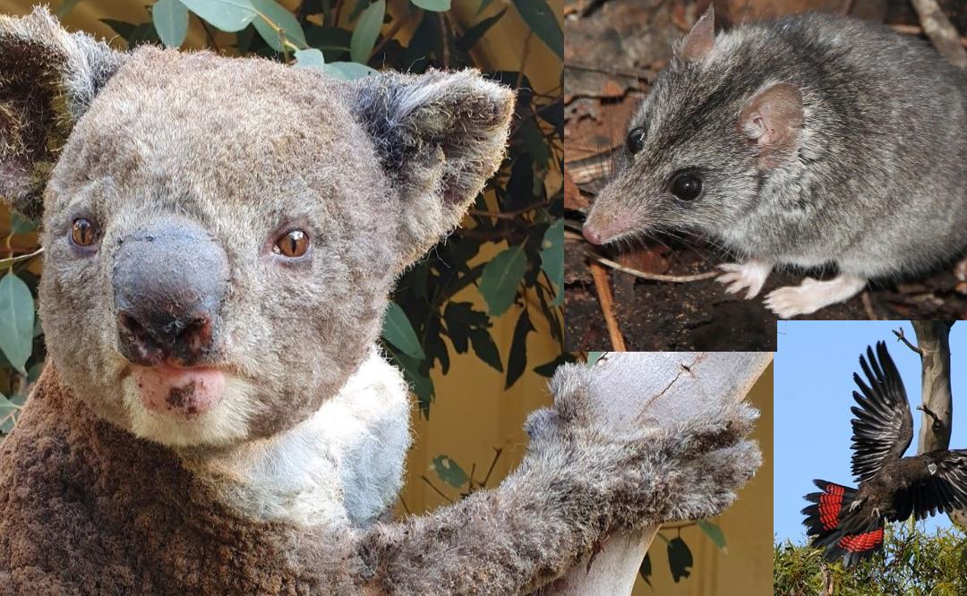 Donations to help Wildlife on Kangaroo Island