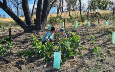 Stories of Recovery after the Cudlee Creek and Kangaroo Island Fires – from the Wildlife Recovery Fund