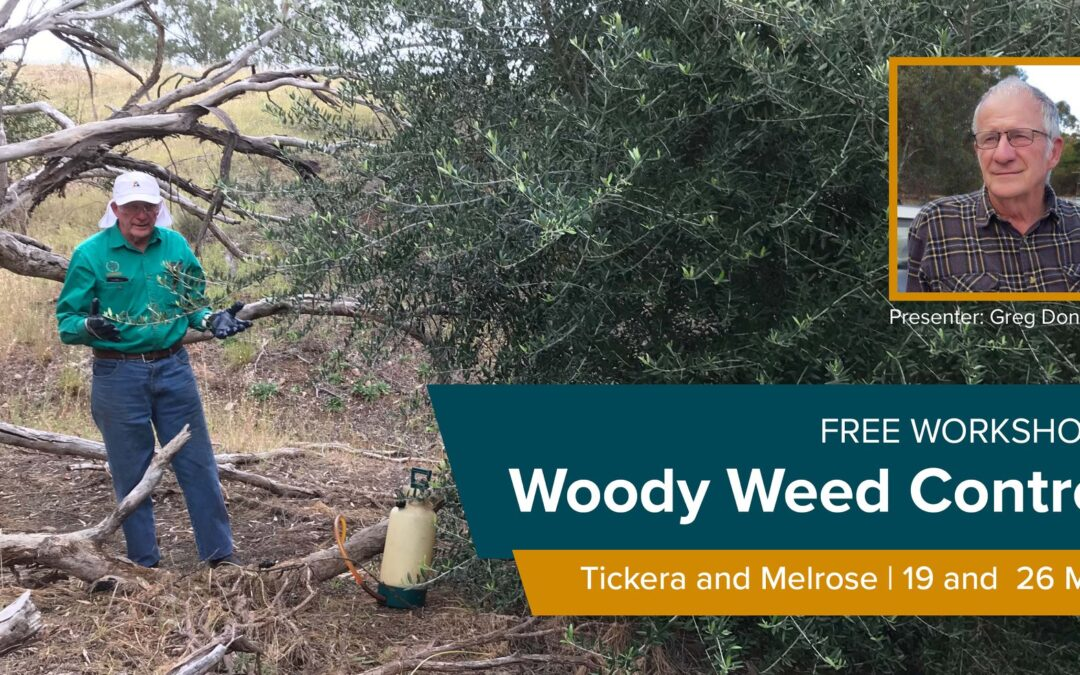 Free workshops on woody weed control on 19 and 26 May in Tickera and Melrose!