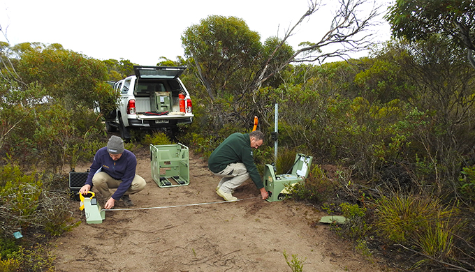 A project to rid Dhilba Guuranda-Innes National Park of cats and foxes is having a positive impact for the re-introduction of the brush-tailed bettong.