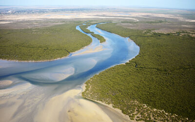 Blue Carbon Investment for South Australia