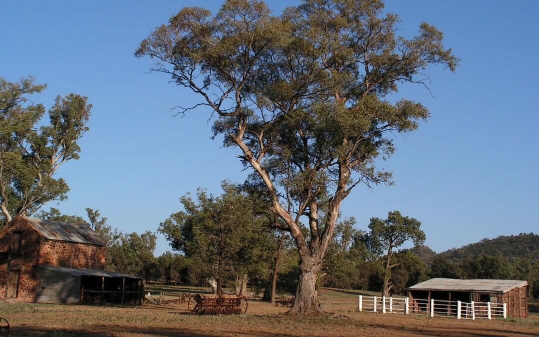 Friends of Ikara-Flinders Ranges NP Park of the Month Event